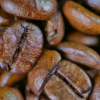 Technivorm Moccamaster Koffiedoos